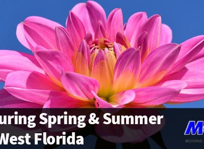 A flower in bloom while you are moving during spring and summer in South West Florida | Mov2Day Blog