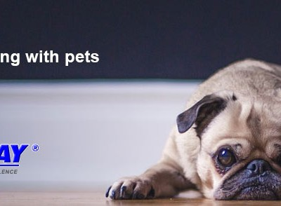 Tips for Moving with Pets | Mov2Day Blog